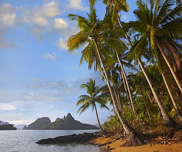 Palm trees on coast, Bacuit Bay near El Nido, Palawan, Philippines  -  Tim Fitzharris