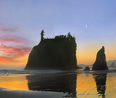 Seastacks silhouetted at sunset, Ruby Beach, Olympic National Park, Washington  -  Tim Fitzharris