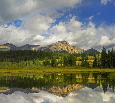 Cottonwood Slough and Pyramid Mountain, Jasper National Park, Alberta, Canada  -  Tim Fitzharris