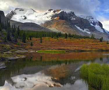 Saskatchewan Glacier, Mount Athabasca, and Mount Andromeda, Jasper National Park, Alberta, Canada  -  Tim Fitzharris