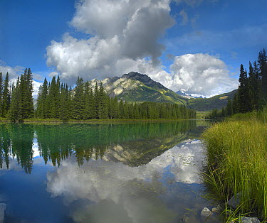 Bow River and Sawback Range, Banff National Park, Alberta, Canada  -  Tim Fitzharris