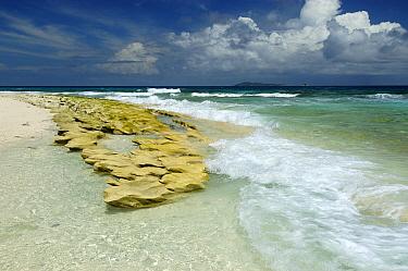 Shoreline, Cousin Island, Seychelles  -  Wil Meinderts/ Buiten-beeld