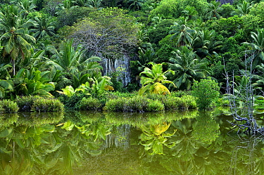 Forest and lagoon, Silhouette Island, Seychelles  -  Wil Meinderts/ Buiten-beeld