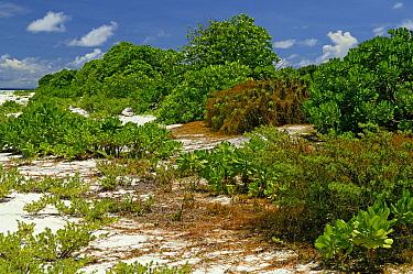 Trees on shore, Cosmoledo Atoll, Seychelles  -  Wil Meinderts/ Buiten-beeld