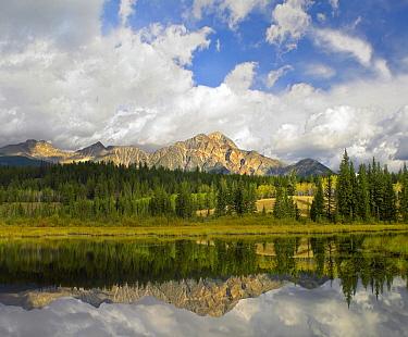 Pyramid Mountain and Cottonwood Slough, Jasper National Park, Alberta, Canada  -  Tim Fitzharris