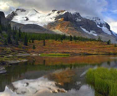 Saskatchewan Glacier, Mount Athabasca and Mount Andromeda, Columbia, Jasper National Park, Alberta, Canada  -  Tim Fitzharris