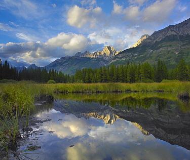 Opal Range, Kananaskis Country, Alberta, Canada  -  Tim Fitzharris