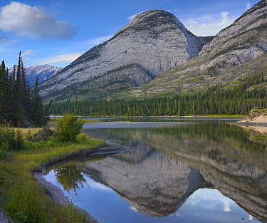 Colin Range, Athasca River, Jasper National Park, Alberta, Canada  -  Tim Fitzharris