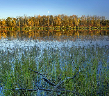 Moon over Marsh's Lake, Spruce Woods Provincial Park Manitoba, Canada  -  Tim Fitzharris