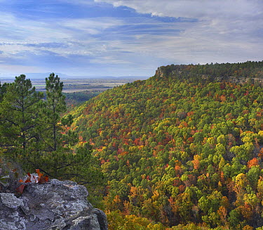 Forest with autumn foliage, Petit Jean State Park, Arkansas  -  Tim Fitzharris