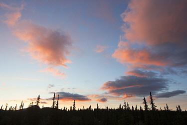 Midnight sun illuminating clouds above taiga in Alaska Range, Denali National Park, Alaska  -  Matthias Breiter