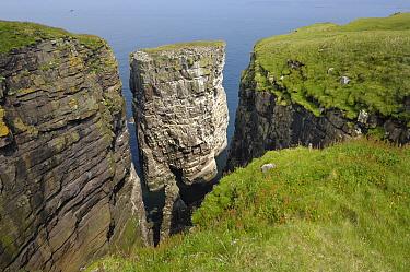 Cliffs of Handa Island, Tarbet, Scotland  -  Dirk-Jan van Unen/ Buiten-beeld