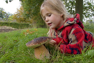 King Bolete (Boletus edulis) and young girl, s-Graveland, Netherlands  -  Luc Hoogenstein/ Buiten-beeld