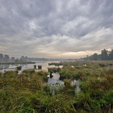 Kogelvangersven swamp, Kampina, Oisterwijk, Netherlands  -  Ruud Peters/ Buiten-beeld