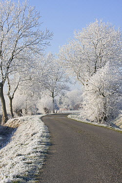Road winding between ice-covered trees, Wirdum, Netherlands  -  Jaap Schelvis/ Buiten-beeld