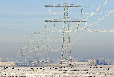 Transmission towers and wires in a winter landscape, Dordrecht, Netherlands  -  Hans Gebuis/ Buiten-beeld