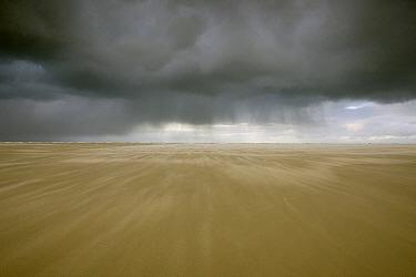 Rainstorm over plains, Wadden Sea, Netherlands  -  Ruben Smit/ Buiten-beeld