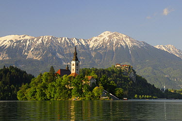Church on island on Lake Bled, Slovenia  -  Bendiks Westerink/ Buiten-beeld
