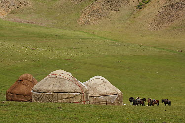 Domestic Horses (Equus caballus) standing near yurts in steppe landscape, Temir Kanat, Kyrgyzstan  -  Jaap Schelvis/ Buiten-beeld
