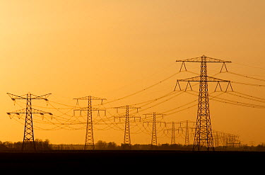 Powerlines at sunset, Netherlands  -  Nico van Kappel/ Buiten-beeld