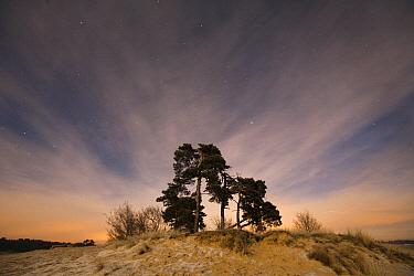 Drifting sand landscape at dusk, Radio Kootwijk, Netherlands  -  Ruben Smit/ Buiten-beeld