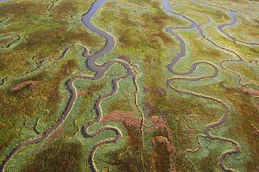 Aerial of saltmarshes in estuary, Land van Saeftinghe, Netherlands  -  Wouter Pattyn/ Buiten-beeld
