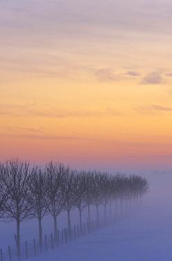 Tree rows in winter landscape at sunset, Zuidland, Netherlands  -  Nico van Kappel/ Buiten-beeld