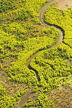 Creek in moor of wetland reserve, Lelystad, Netherlands  -  Ruben Smit/ Buiten-beeld
