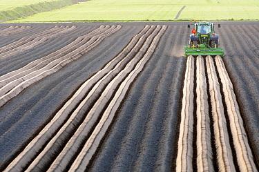 Potato (Solanum tuberosum) beds being shaped, Goudswaard, Netherlands  -  Nico van Kappel/ Buiten-beeld