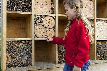 Young girl examining insect refuge in an orchard, Haarzuilens, Netherlands  -  Luc Hoogenstein/ Buiten-beeld