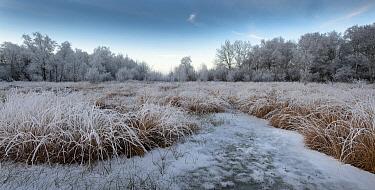 Frozen fen with rime ice, Katlijk, Netherlands  -  Gert Buter/ Buiten-beeld