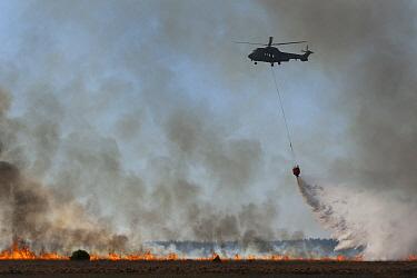 Wildfire with helicopter dousing flames, Bovensmilde, Netherlands  -  Gert Buter/ Buiten-beeld