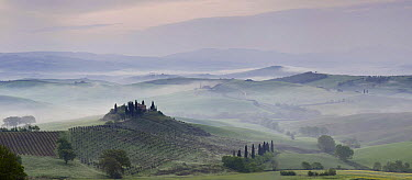 Foggy landscape with vineyards, Val d'Orcia, Italy  -  Bendiks Westerink/ Buiten-beeld