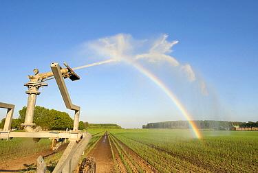 Onion (Allium cepa) field being irrigated, Zuidland, Netherlands  -  Nico van Kappel/ Buiten-beeld