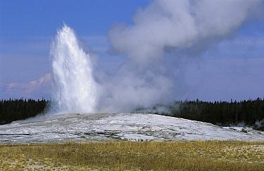 Old Faithful Geyser erupting, Yellowstone National Park, Wyoming  -  Wil Meinderts/ Buiten-beeld