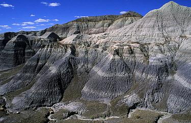 Badlands, Petrified Forest National Park, Arizona  -  Wil Meinderts/ Buiten-beeld