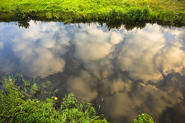 Cumulus clouds reflected in small canal, Dwarsgracht, Netherlands  -  Ruben Smit/ Buiten-beeld