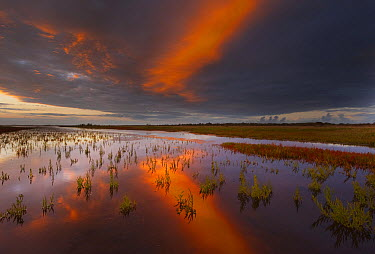 Sunset over fields of glasswort, Slikken van Flakkee Nature Reserve, Netherlands  -  Nico van Kappel/ Buiten-beeld