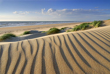 Rippled dunes on the coast of the North Sea, Wassenaar, Netherlands  -  Ernst Kremers/ Buiten-beeld