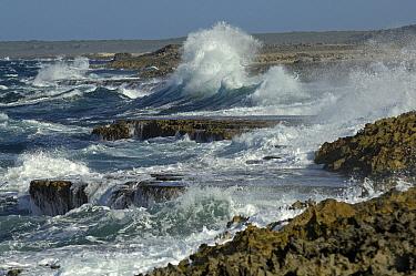 Rough sea near Koraal Tabak, Curacao, Dutch Antilles  -  Wil Meinderts/ Buiten-beeld
