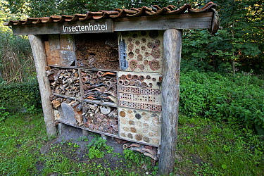 Nesting boxes for various types of bees, Woumen, Belgium  -  Wouter Pattyn/ Buiten-beeld