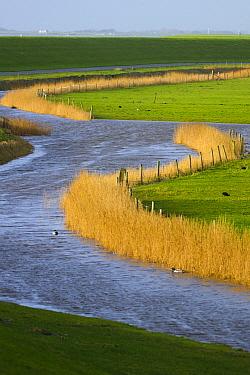 River through reclaimed lowland, Ameland, Netherlands  -  Nico van Kappel/ Buiten-beeld