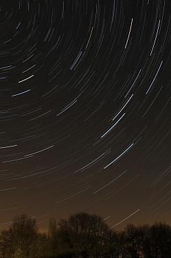 Star trails through clear winter sky over bare trees, Bommelerwaard, Netherlands  -  Wil Meinderts/ Buiten-beeld
