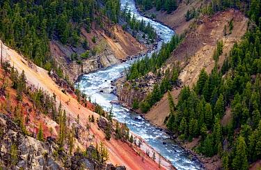 Grand Canyon of Yellowstone, Yellowstone National Park, Wyoming  -  Nico van Kappel/ Buiten-beeld