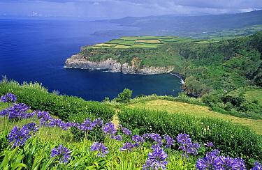Sao Miguel Island seen from Santa Iria, Azores, Portugal  -  Wil Meinderts/ Buiten-beeld