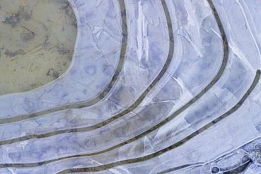 Ice patterns on puddle, Bavaria, Germany  -  Konrad Wothe