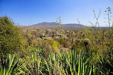 Spiny Desert between Tolagnaro and Ambovombe, Madagascar  -  Konrad Wothe