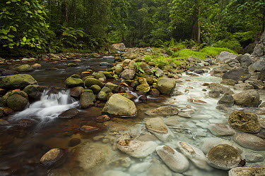 River joined by water from hot spring causing white sulphur deposits, Tawau Hills Park, Sabah, Borneo, Malaysia  -  Sebastian Kennerknecht