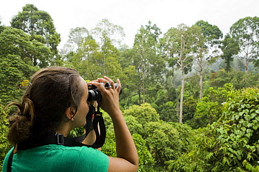 Birdwatcher on canopy walkway looking for canopy birds in upper story, Sepilok Forest Reserve, Sabah, Borneo, Malaysia  -  Sebastian Kennerknecht