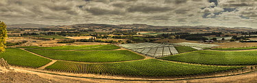 Grape (Vitis vinifera) vineyard, Waipara Valley, North Canterbury, New Zealand  -  Colin Monteath/ Hedgehog House